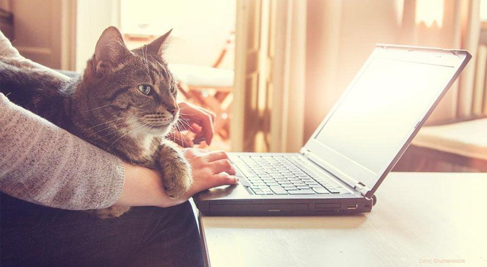 Co znamená zkratka CAT?